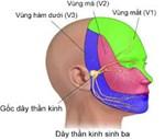 Đau dây thần kinh số V – HHK